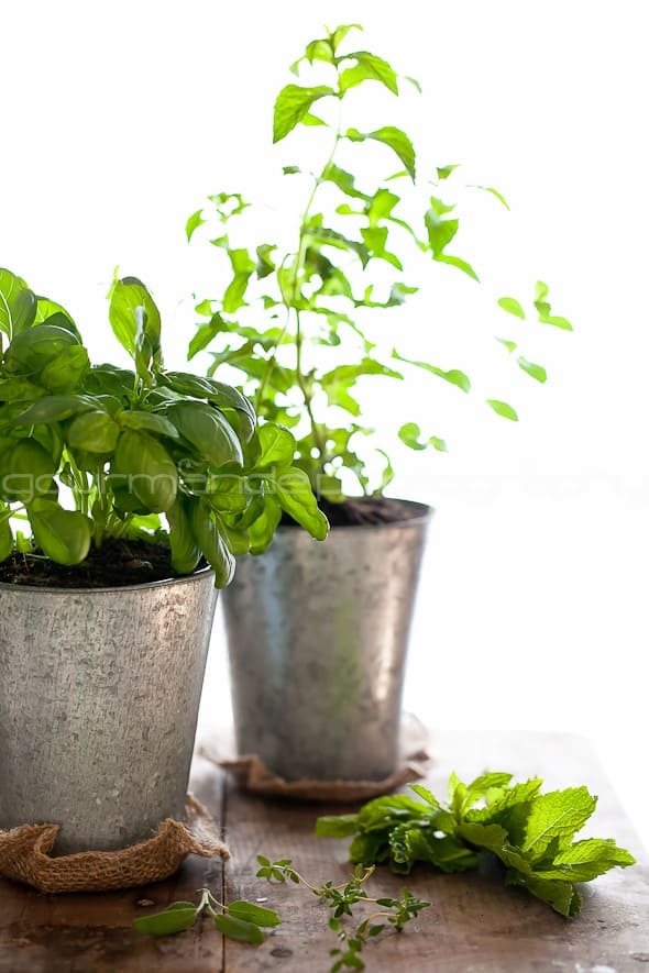 an indoor culinary garden 1 of 1 3 An Indoor Culinary Herb Garden | Growing Your Own Flavor